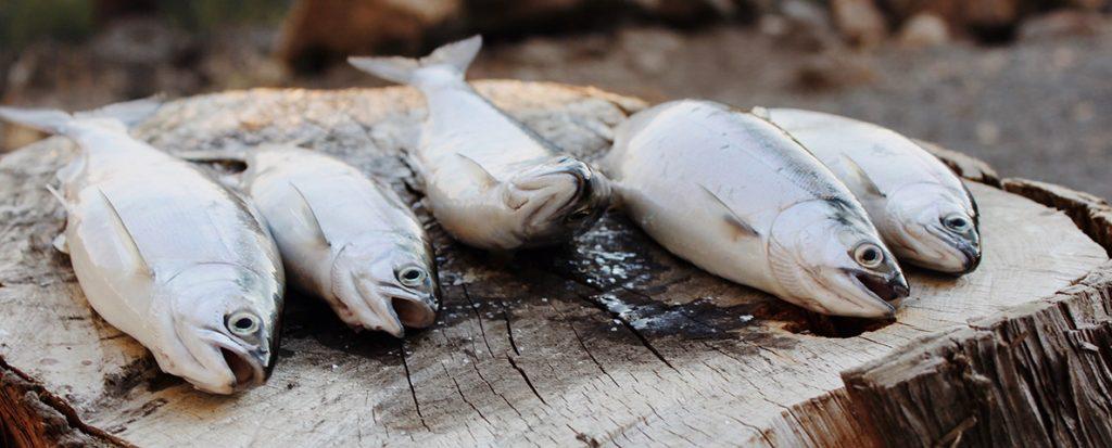 Some fish.