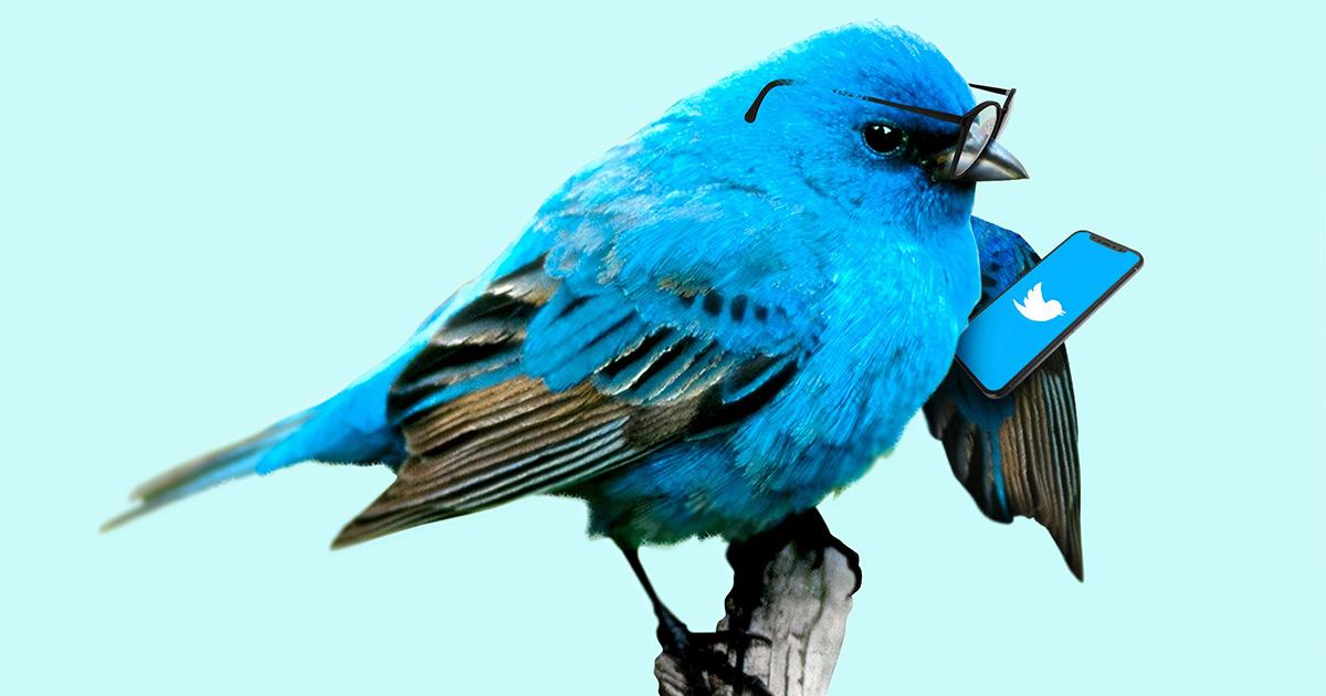 A bluebird tweeting